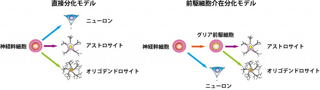 島崎先生2-1024x289